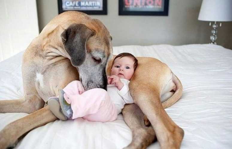 26 фото, которые поймут только родители! Обхохочешься!