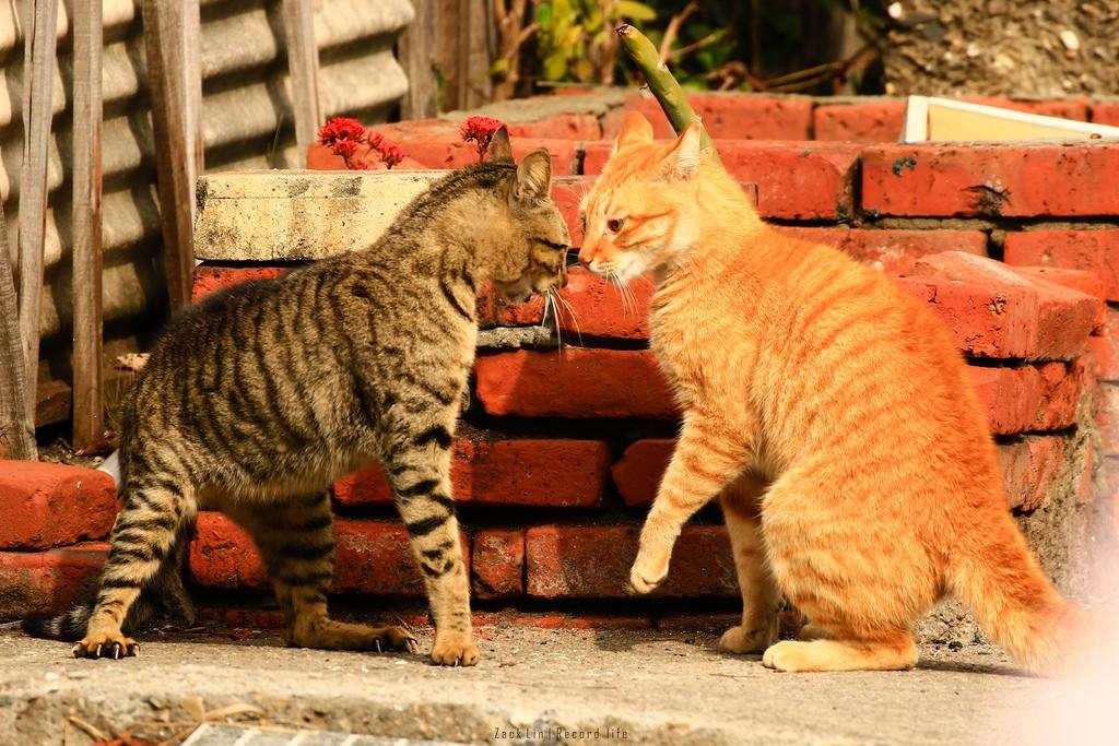 Дневник дворового кота