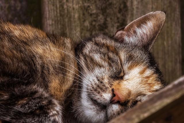 А ваш кот тоже спит с вами?