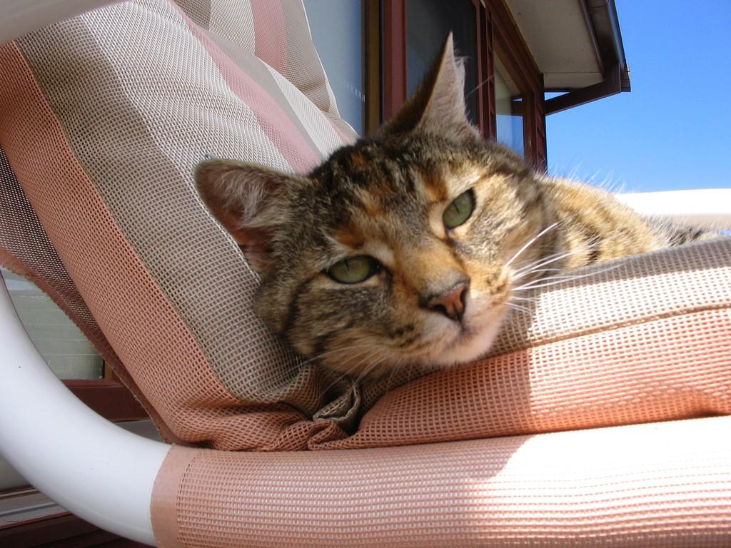 Дневник дворового кота. Часть II «морская»