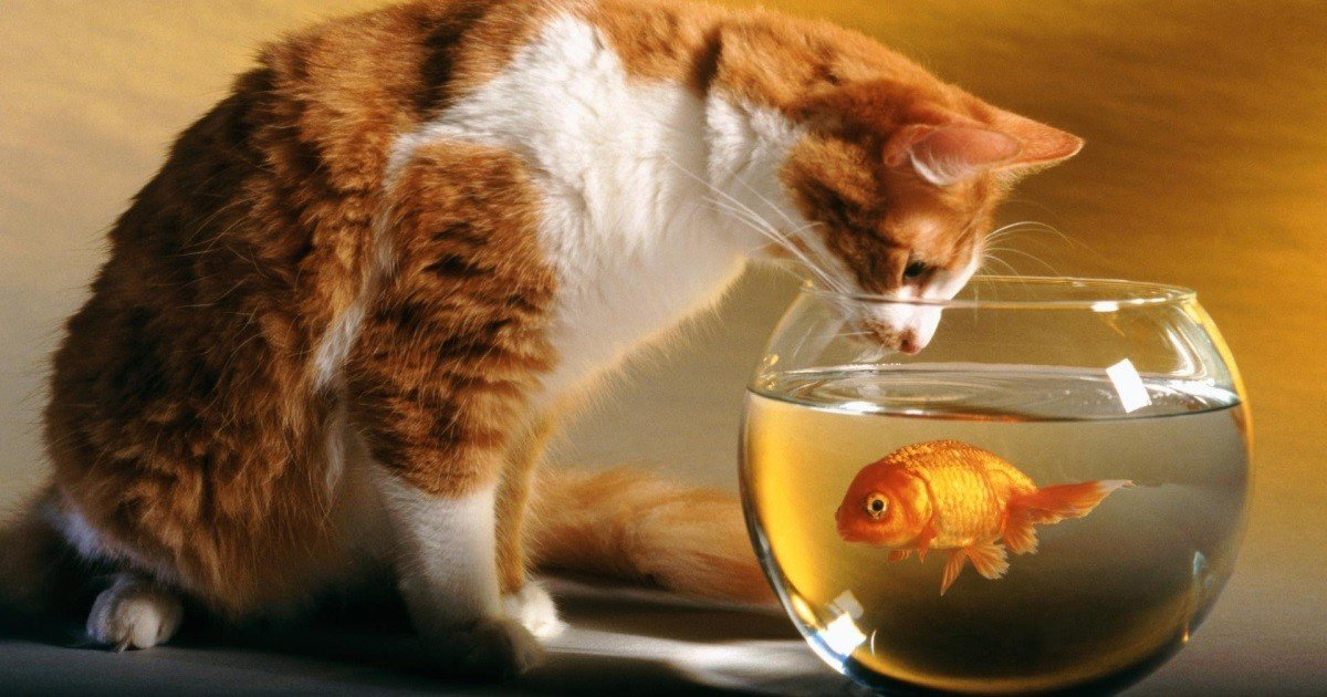 кошки и негатив