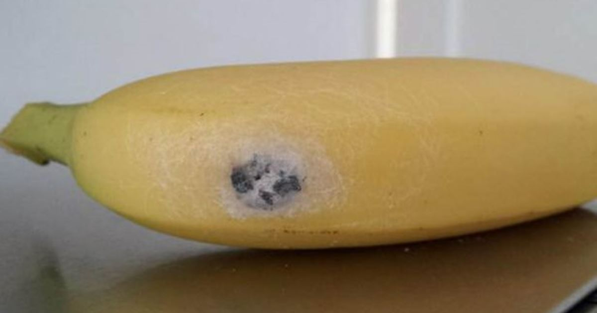 банановый паук