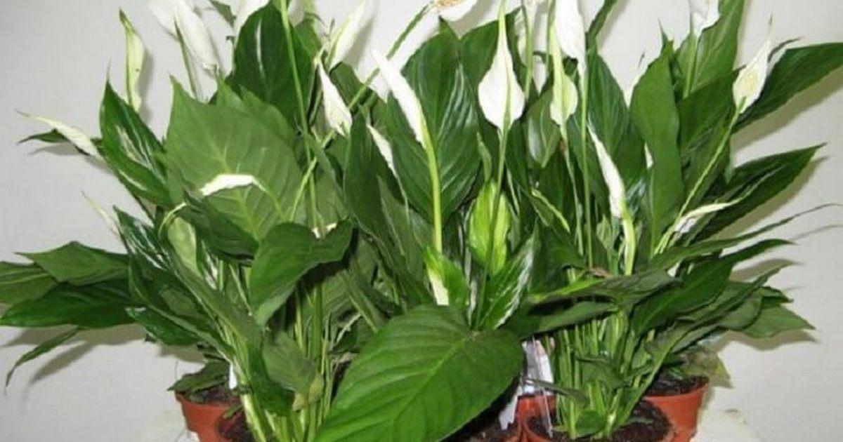 полезные растение
