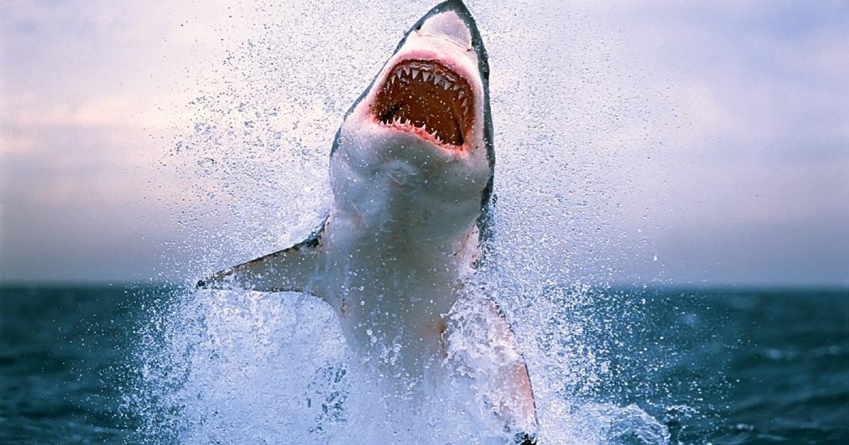 Истинное лицо человека-акулы